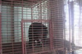 坚江省野生动物保护中心收留两头被非法圈养的月熊
