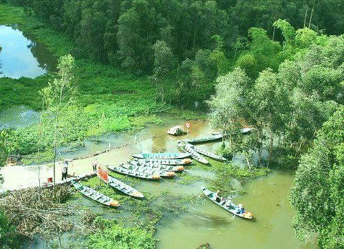 gao giong- zona ekowisata  yang menarik di kawasan dong thap muoi hinh 1