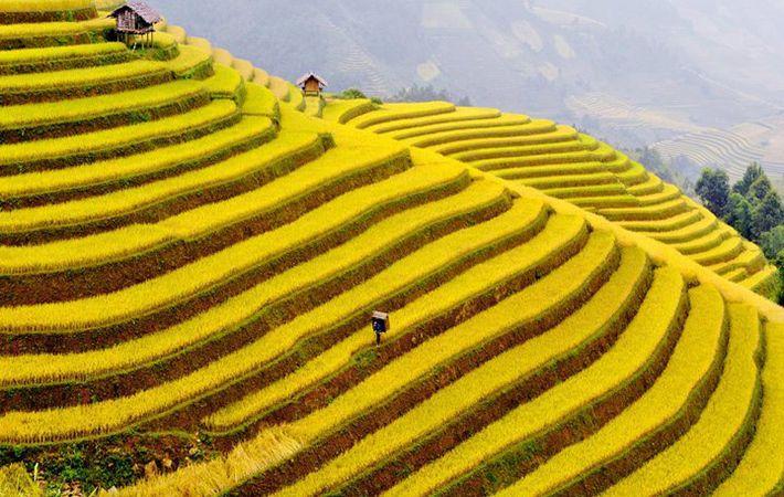 pesawahan terasering di kabupaten mu cang chai-keindahan  megah di daerah  pegunungan tay bac hinh 0