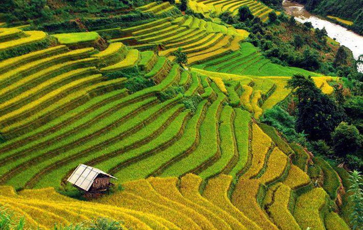 pesawahan terasering di kabupaten mu cang chai-keindahan  megah di daerah  pegunungan tay bac hinh 1