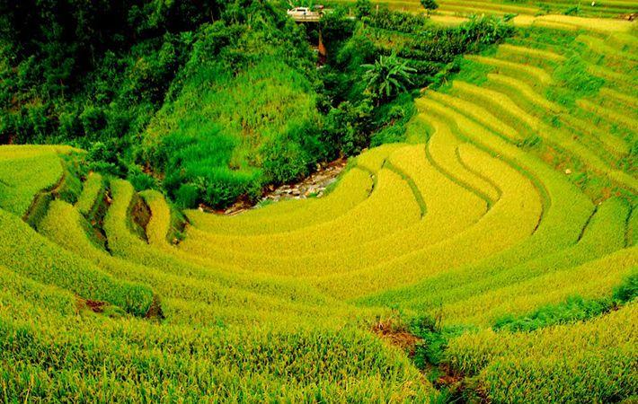 pesawahan terasering di kabupaten mu cang chai-keindahan  megah di daerah  pegunungan tay bac hinh 3