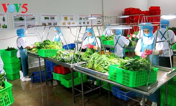 menggandakan pola pertanian teknologi tinggi  untuk kepentingan restrukturisasi hinh 0