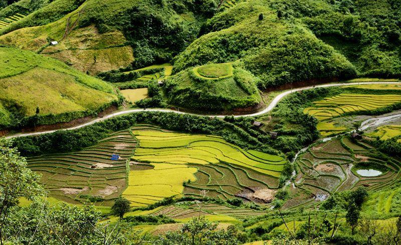 daerah dataran tinggi sin ho: keindahan yang masih liar di daerah pegunungan dan hutan tay bac hinh 1