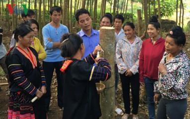 テェンヒエン省コムの木育てによる貧困解消 hinh 1