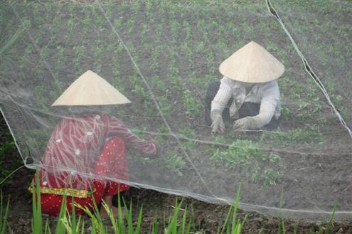 Cooperative model's role in new rural development Village life
