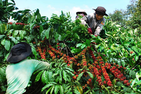 Agriculture – backbone of Vietnam's economy in 2012