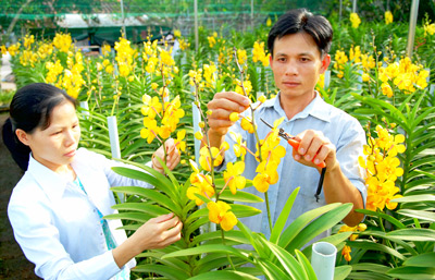 Spring in new rural district of Cu Chi, Ho Chi Minh City Village life