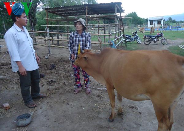 Ninh Thuan farmers' mutual support for economic development Village life