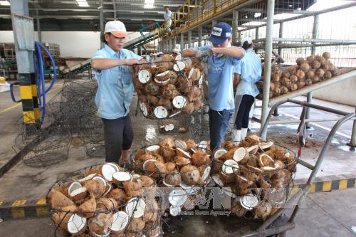 Agro-forestry-fishery exports earn nearly 21 billion USD in 8 months