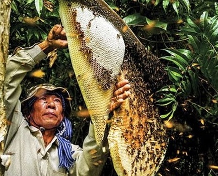 Beekeeping to get rich and respond to climate change in Mekong Delta Village life