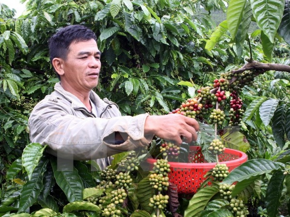 developing coffee zones in dak lak province  hinh 0