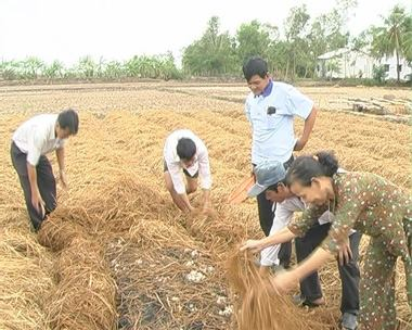 dong thap farmers make fortune growing straw mushrooms hinh 0