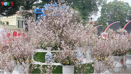 ハノイて日本文化交流会と桜展示会か始まる hinh 1