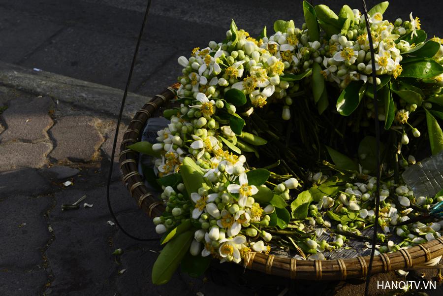 柚子花——三月的暗香 hinh 0