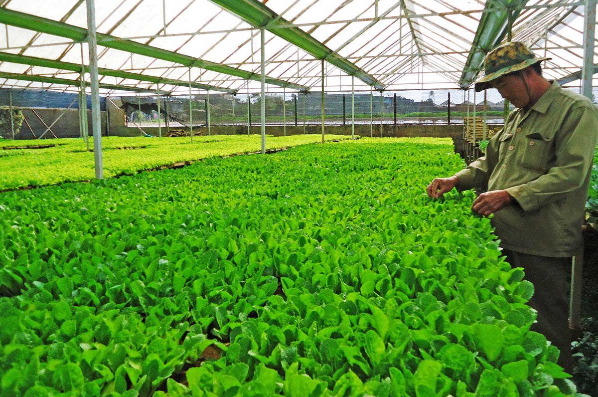 promoting vietnam's green brand names  hinh 0