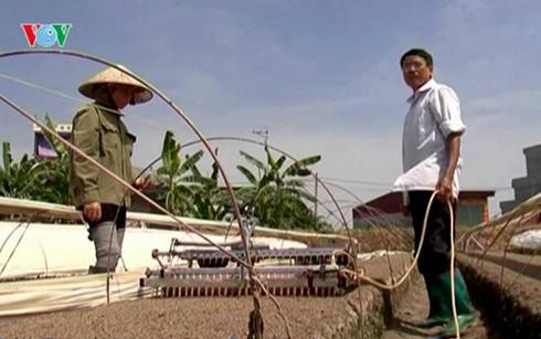 bauern in ho chi minh stadt engagieren sich fur wissenschaftlich- technologische innovation hinh 0