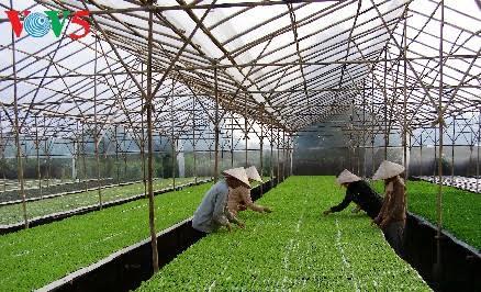 provinsi ha nam mengembangkan pertanian teknologi tinggi hinh 0