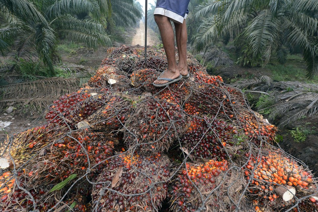 A worker stands on palm oil seeds in Riau province, Indonesia. An Indonesian palm-oil company, Astra Agro Lestari, committed itself to policies to reduce deforestation. Credit Adek Berry/Agence France-Presse — Getty Images