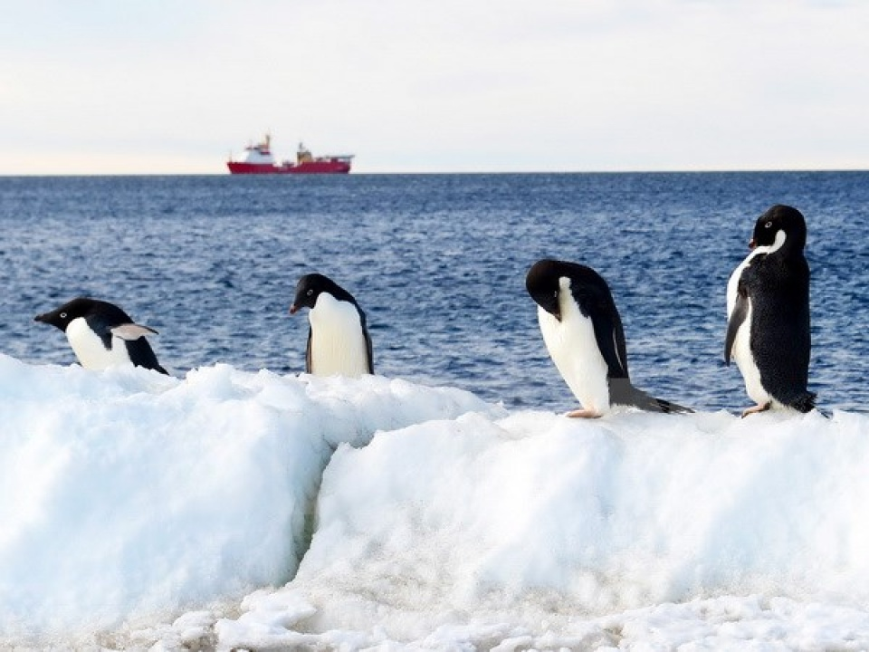 World effort to protect penguins in Antarctica