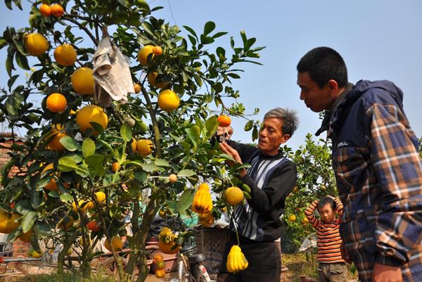 Creador de rboles de 5 g neros frutales para el tet - Como cuidar los arboles frutales ...