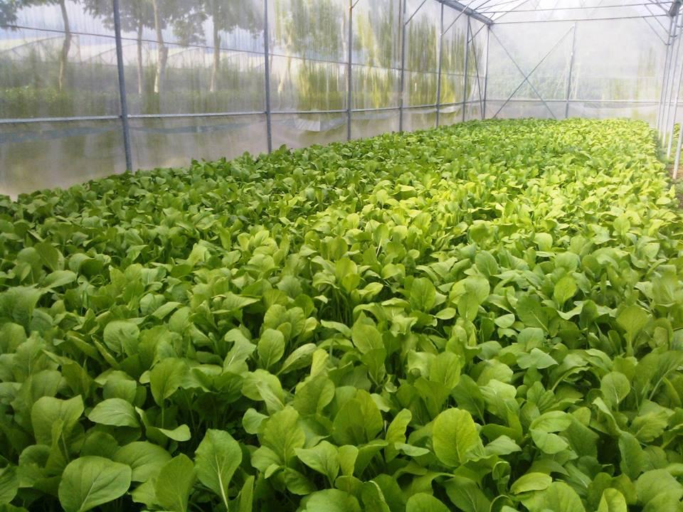 agricultores de ciudad ho chi minh participan en innovacion tecnologica  hinh 2