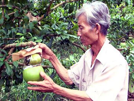 una visita a la cuna de frutas singulares para el tet vietnamita hinh 1