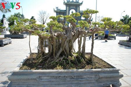 peninsula de son tra, el jade de danang hinh 7