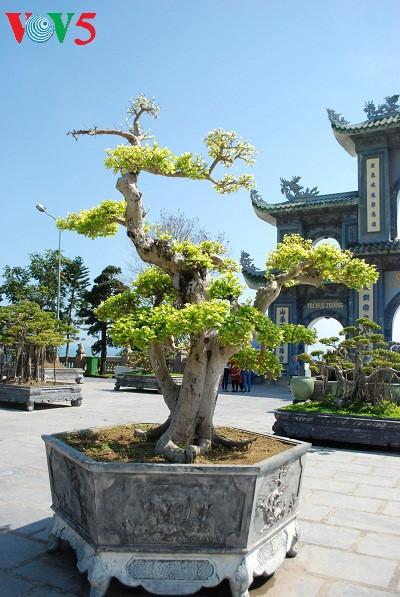 peninsula de son tra, el jade de danang hinh 8