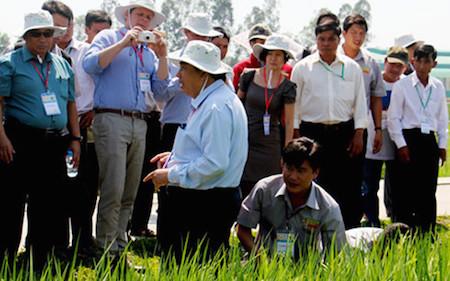 promueven produccion de arroz segun estandares internacionales hinh 0