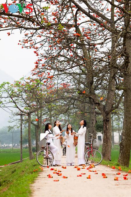 brilla el color rojo del algodonero en campo norteno de vietnam hinh 13