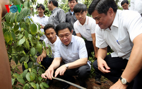 Deputy Prime Minister Vuong Dinh Hue works with Gia Lai province