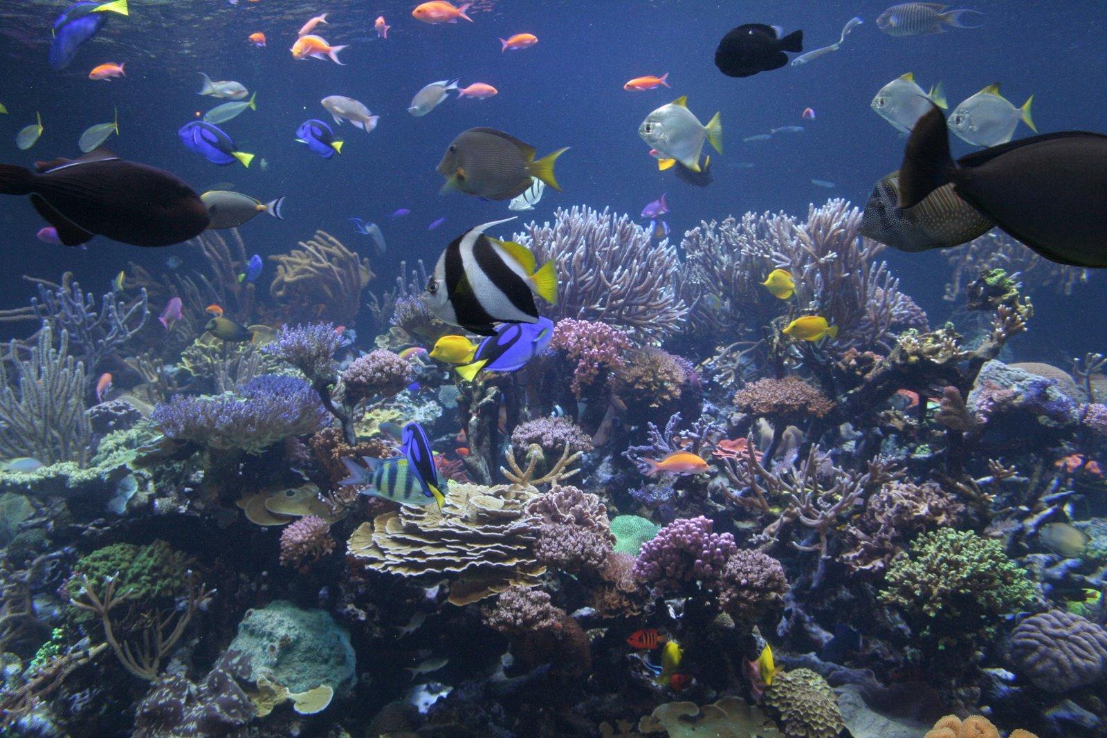 «жемчужныи остров» фукуок – идеальное место для летнего отдыха hinh 1