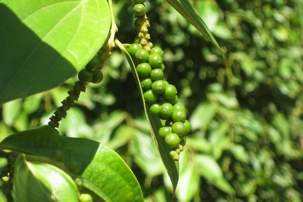 своеобразие туристическои продукции острова фукуок hinh 0
