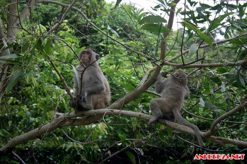 национальныи парк бабе – интересное место в провинции баккан hinh 3