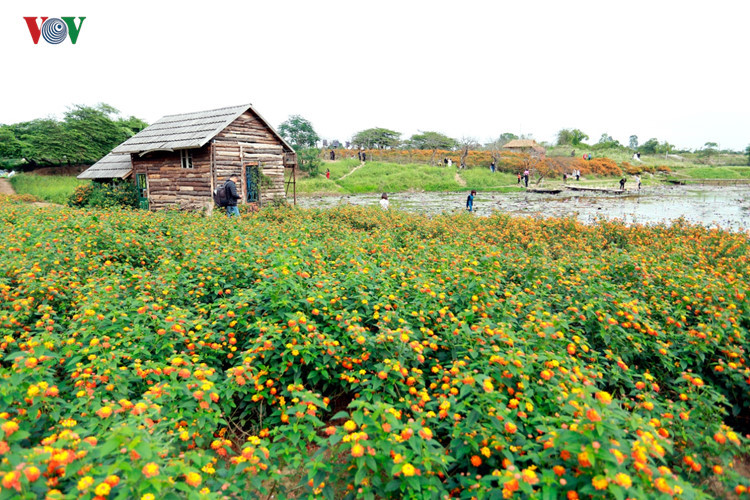 hanoians visit flower villages as tet holiday nears hinh 2