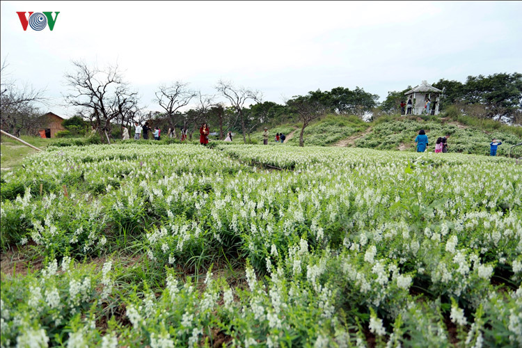 hanoians visit flower villages as tet holiday nears hinh 3