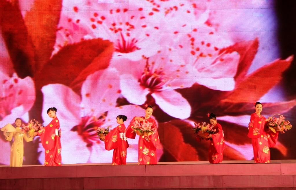 Cherry blossom festival opens in Ha long city