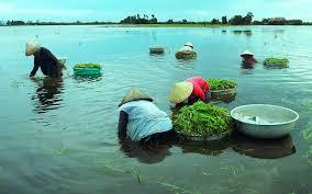 das alltagsleben in dong thap muoi wahrend der hochwassersaison hinh 0