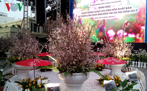 cherry blossom festival boosts vietnam-japan cultural exchange  hinh 0