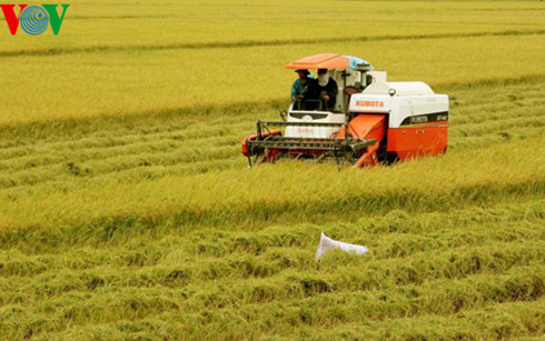 vietnam aims to earn global reputation for rice quality  hinh 0