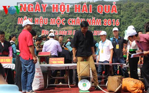 Third annual plum festival in Son La province
