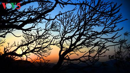 иенты: рассвет над буддистским краем hinh 16