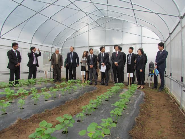 провинция ханам развивает высокотехнологичное сельское хозяиство hinh 0