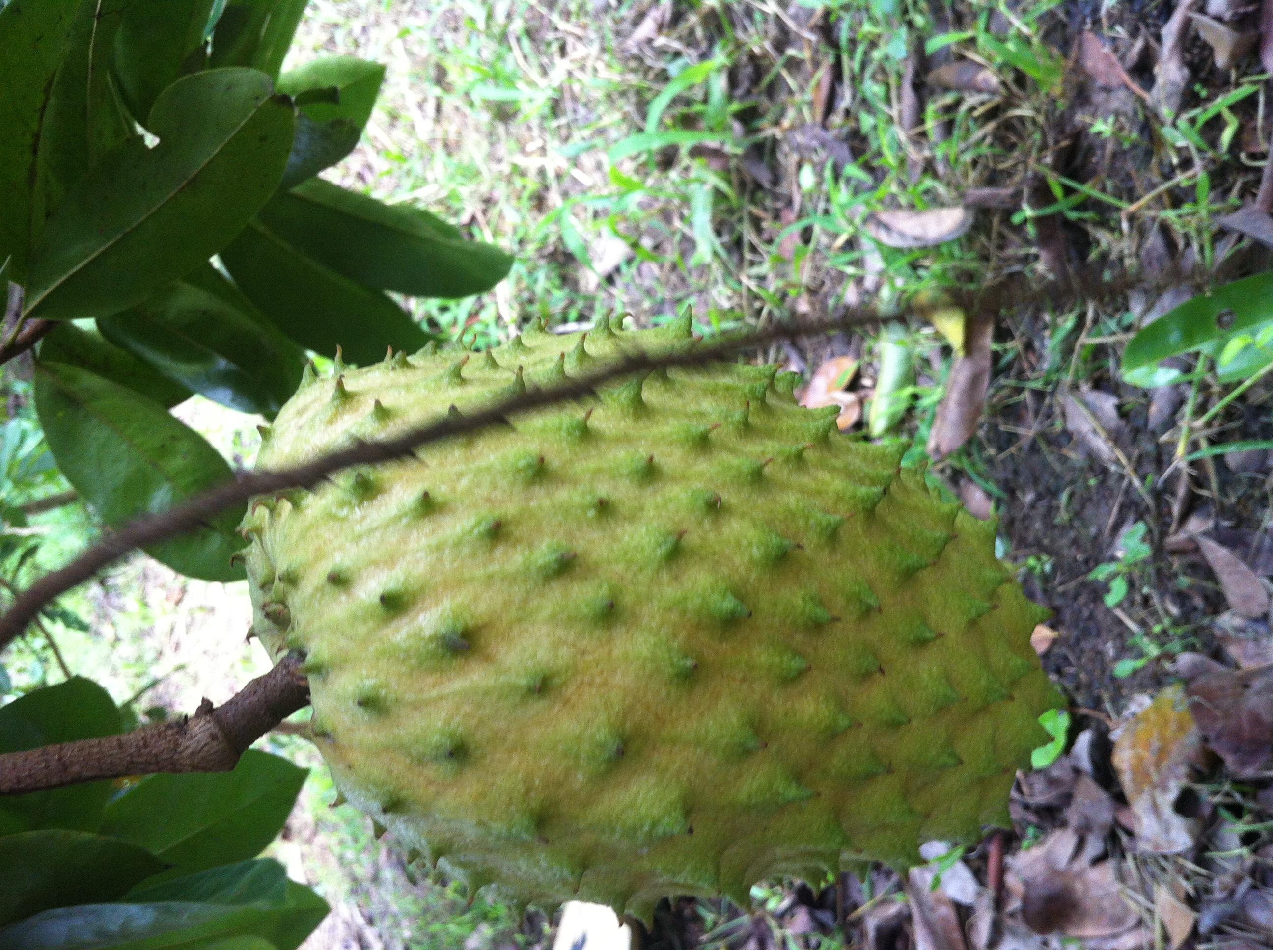 des fruits «stylises», pourquoi pas? hinh 2