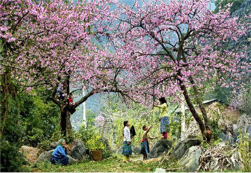 весна пришла в каждую вьетнамскую семью hinh 0