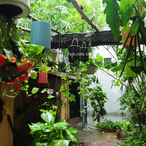 jardin de plantes suspendues l envers dans votre maison wow fen tre des jeunes vov5. Black Bedroom Furniture Sets. Home Design Ideas