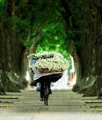 提醒人们寒冷的冬季即将到来的雏菊 hinh 1