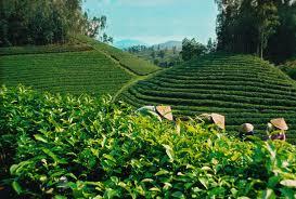 Cooperative economy, key to success in new rural development program in La Bang