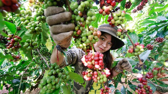 High-tech application in agriculture in Ho Chi Minh City