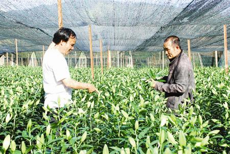 High-tech application boosts agricultural production at Langbiang